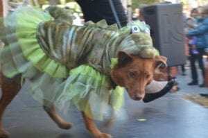 Pet expert Steve Dale on Halloween costumes for pets