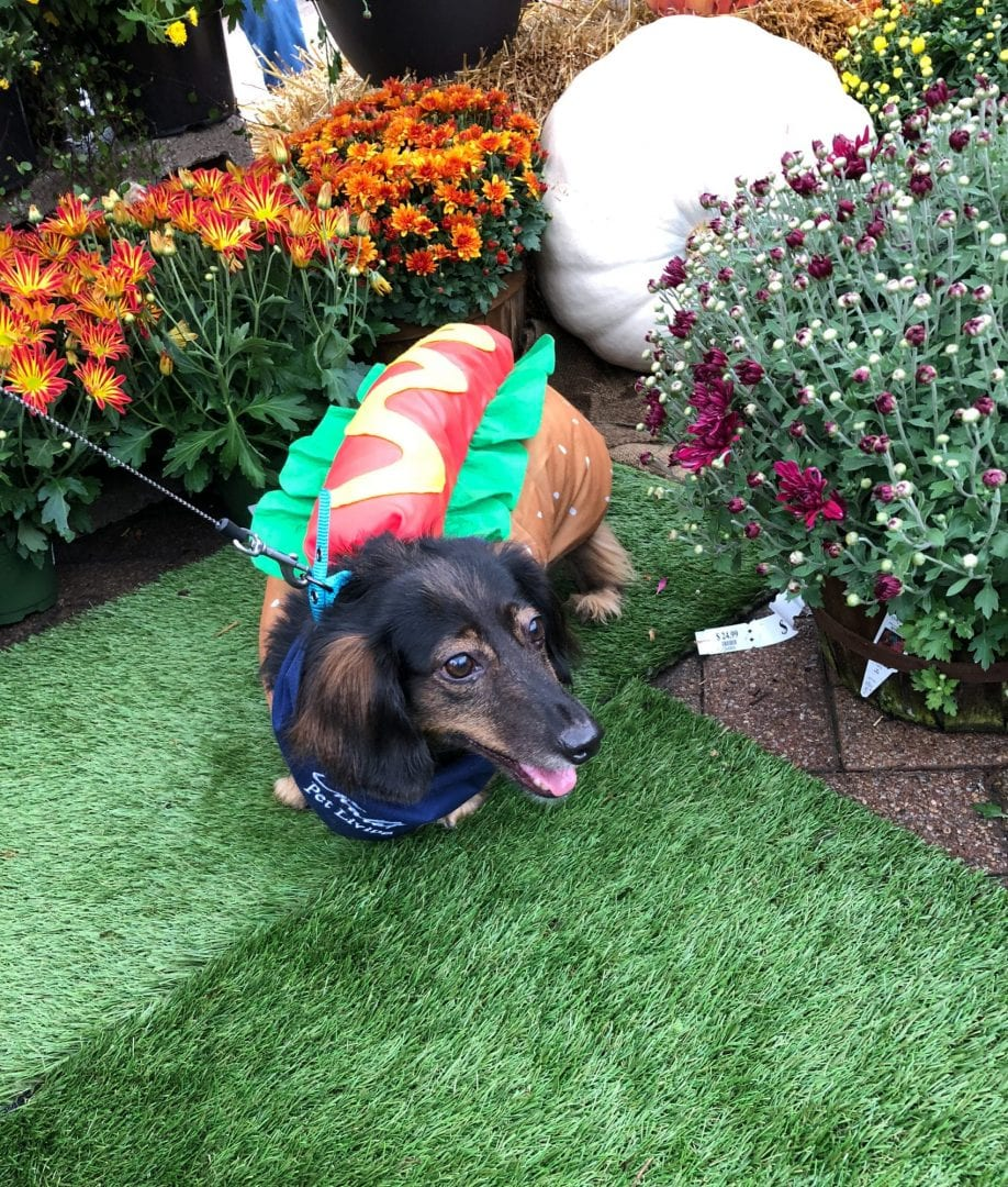 Halloween costumes and pets