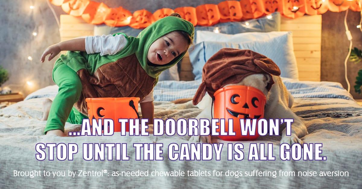 Halloween anxiety address by pet expert Steve Dale