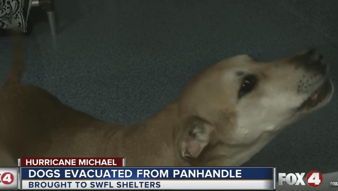 PetSmart Charities helps Hurricane Michael dogs