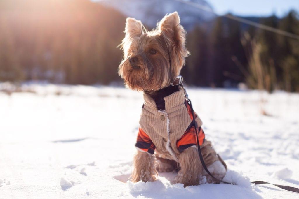 Winter weather tips, pet expert Steve Dale