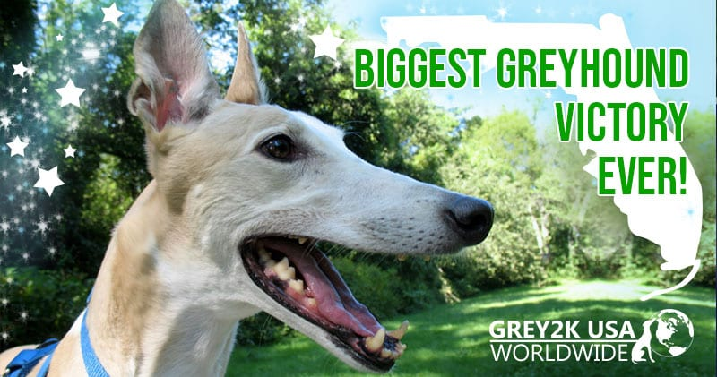 Greyhound racing ban in Florida