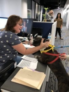 Pet expert Steve Dale on WGN radio adopting a dog from Chicago Care and Control
