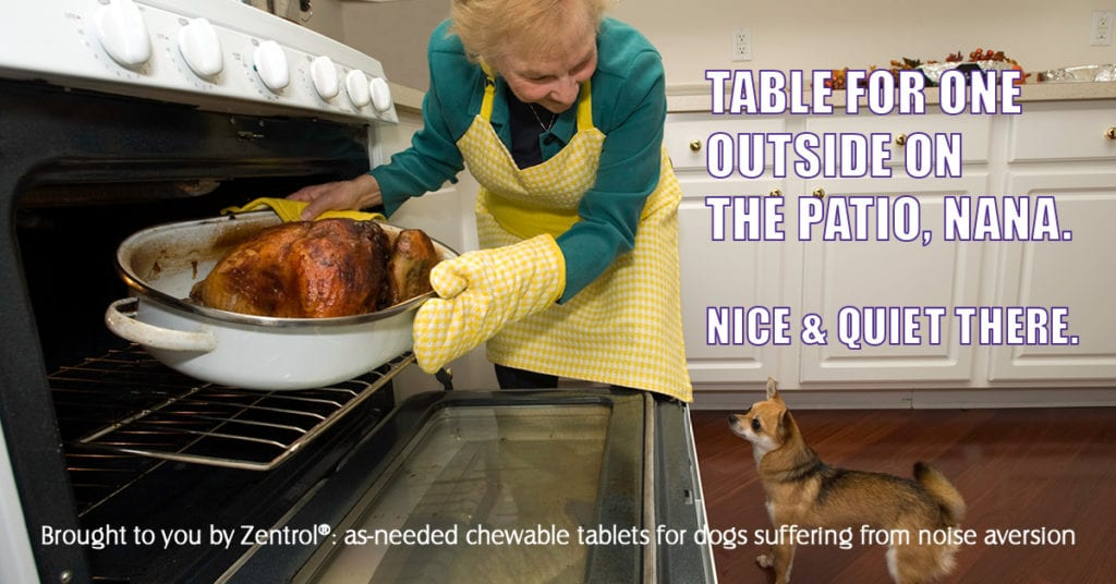 Steve Dale on Thanksgiving pet safety