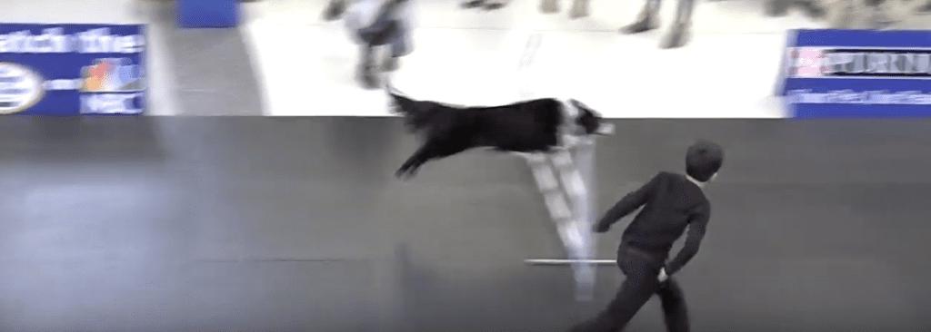 Incredible dog challenge Lourdes Edlin