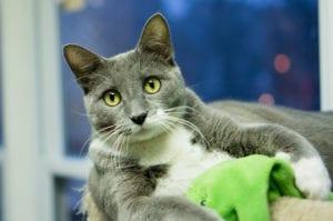 AVMA Pet Ownership survey