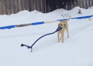 pet expert Steve Dale showing dog shoveling snow