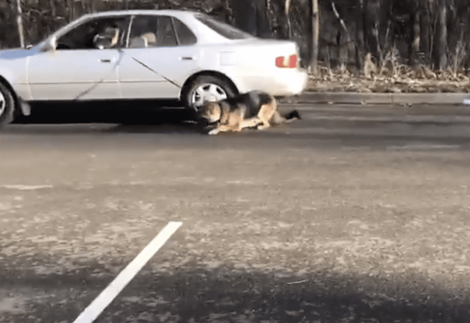 Dragging a dog on a leash, apparently guilty of animal cruelty