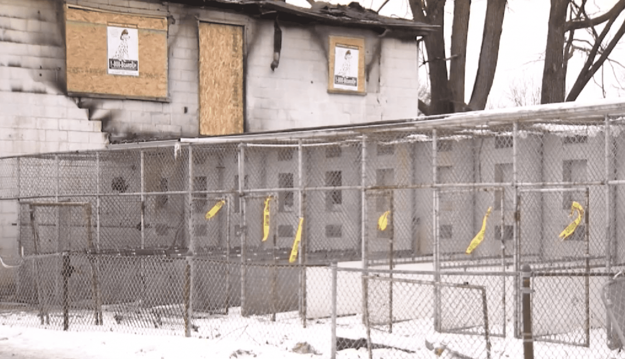 Fire kills 29 dogs, including dogs being re-trained, in West