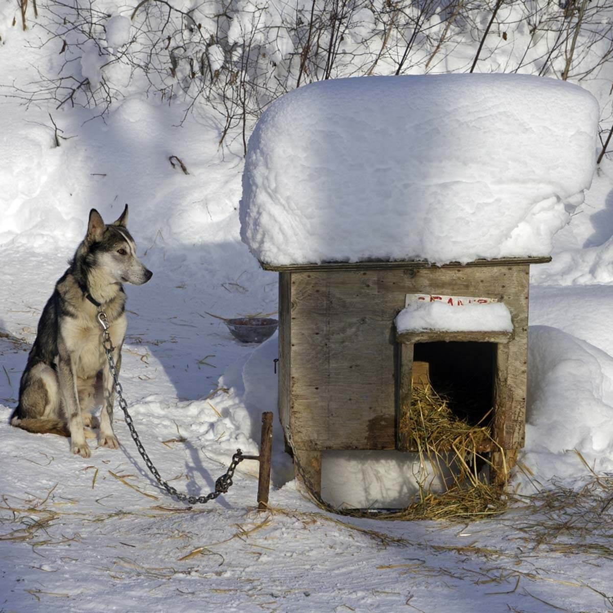 Leaving Dogs Outside In Cold Weather Might Lead To Animal Cruelty