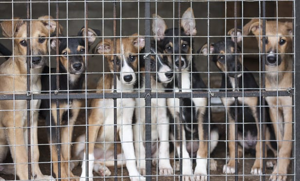 Steve Dale Describes What We Need To Put Puppy Mills Out Of Business
