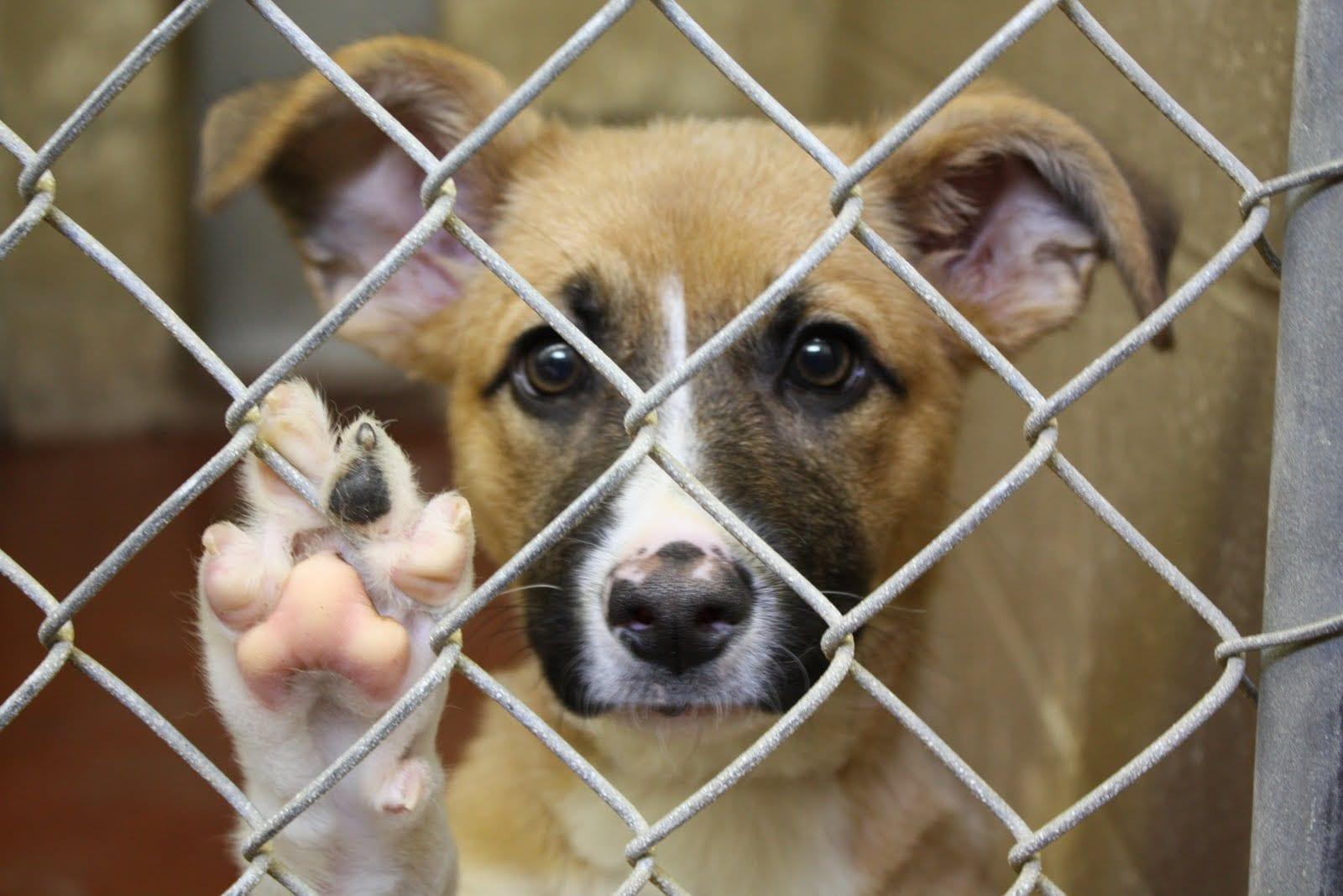 Saving Dogs